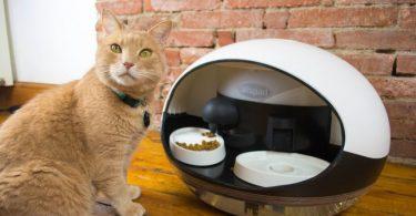 alimenta a tu gato desde tu smartphone